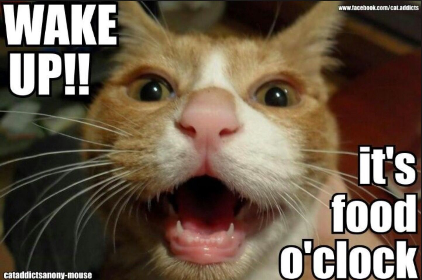 GET AN ALARM CLOCK!!!! Cat memes, Cats, Animals