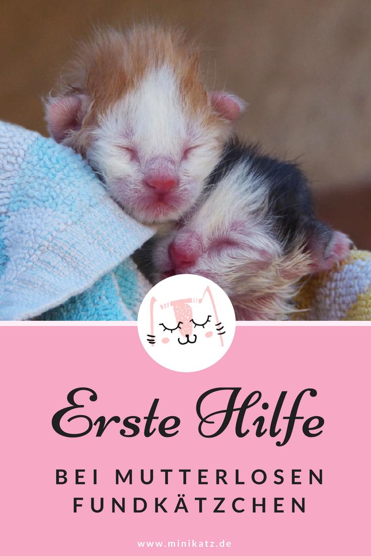 Erste Hilfe bei Fundkätzchen Katzen, Katzenbabys und
