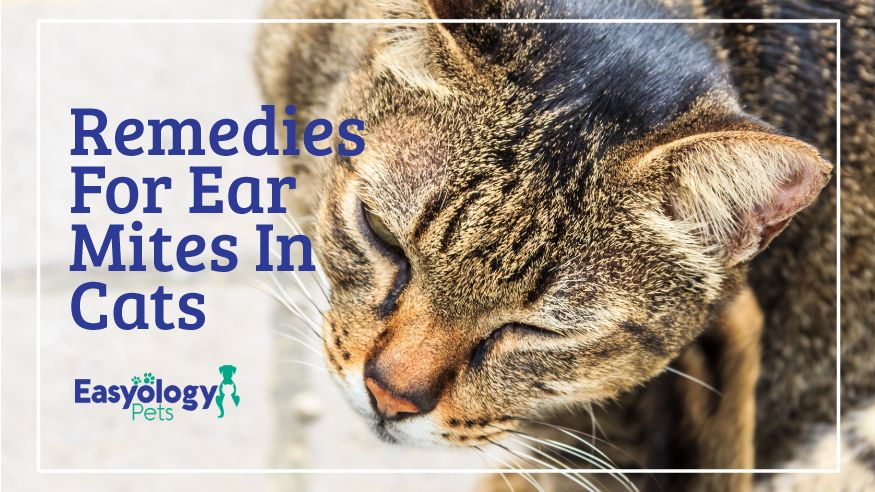 Remedies For Ear Mites In Cats Pet Care Cats Cats Dog Clinic