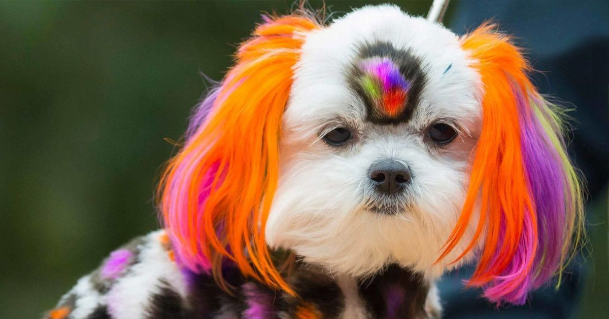 Check out Spooky Pooch Parade at Chicago Botanic Garden in Glencoe on October 21, 2017 and get detailed info for the event - tickets, photos, video and reviews.