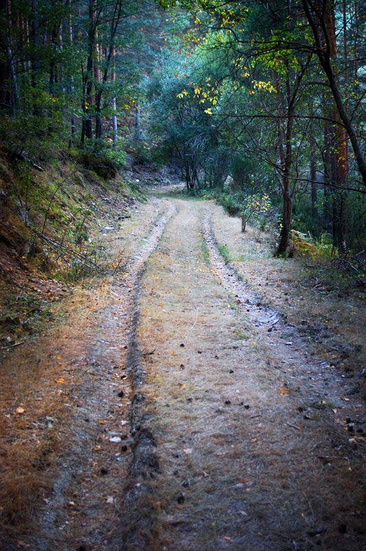 En el bosque... | by C.Aranega ✏✏✏✏✏✏✏✏✏✏✏✏✏✏✏✏ FrenchJEWELRYVintage  ☞ https://www.etsy.com/shop/frenchjewelryvintage?ref=l2-shopheader-name  ══════════════════════  GABY-FÉERIE Bijoux ☞ http://www.alittlemarket.com/boutique/gaby_feerie-132444.html  ✏✏✏✏✏✏✏✏✏✏✏✏✏✏✏✏