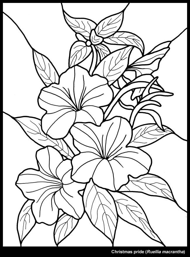 Christmas Flower Dover Publications Coloring Pages Flower Drawing