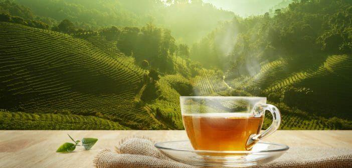Le sobacha fait-il maigrir ? | Vertus du thé vert, Anaca3