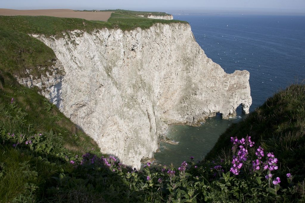 Bempton Cliffs. by Richard McManus on 500px
