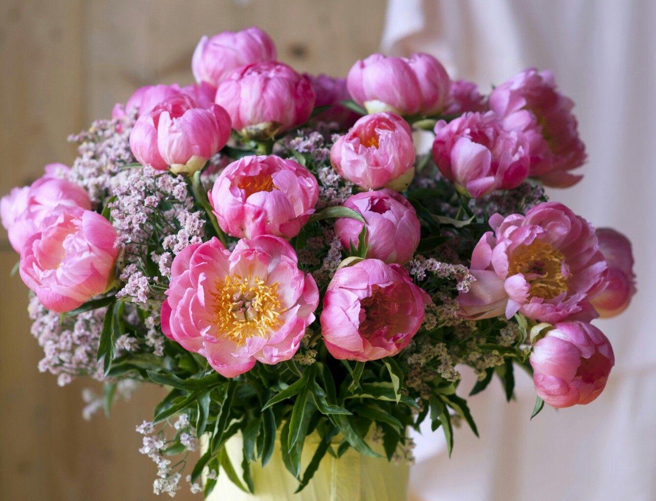 Peonies Closeup Pink Color Flowers Roses Flowers Pinterest