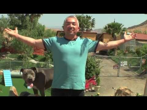 Welcome To Cesar Millan S Youtube Channel Dog Training Dog
