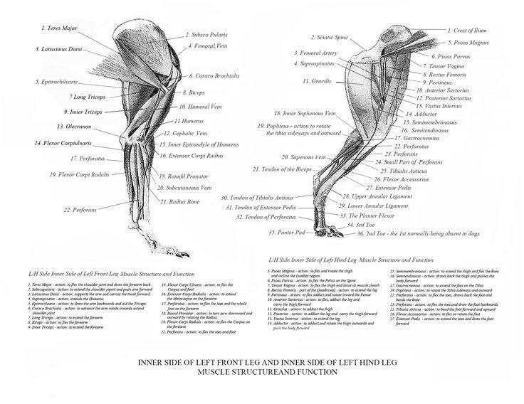 Back Cat In Leg Ligament Torn - Lesbian Arts