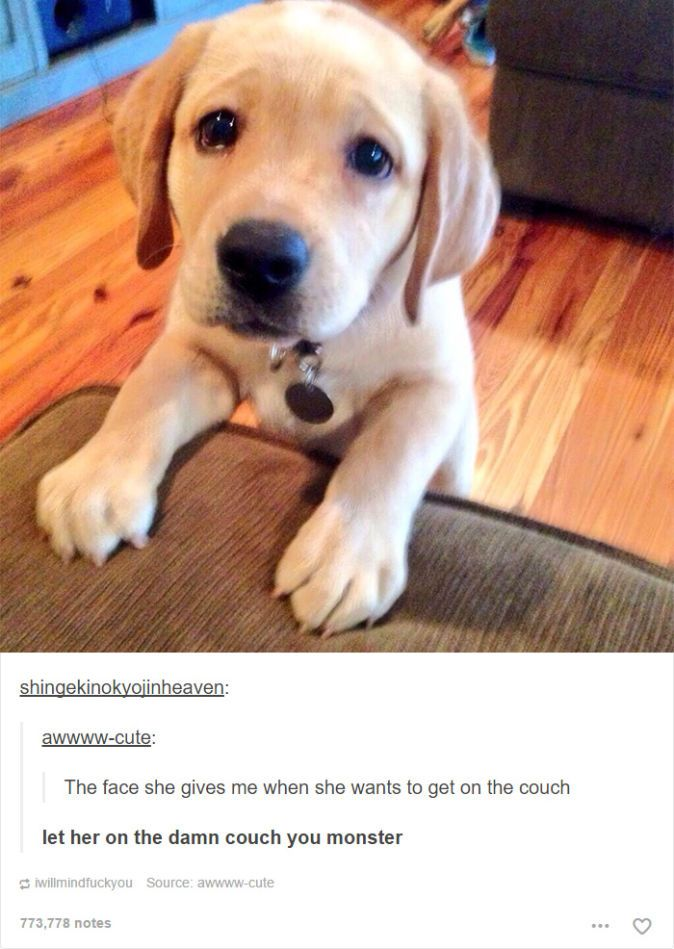 Dog Posts On Tumblr That Are Impossible Not To Laugh At - 24 tumblr posts about dogs that are impossible not to laugh at