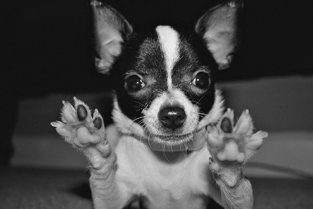 hands/paws up