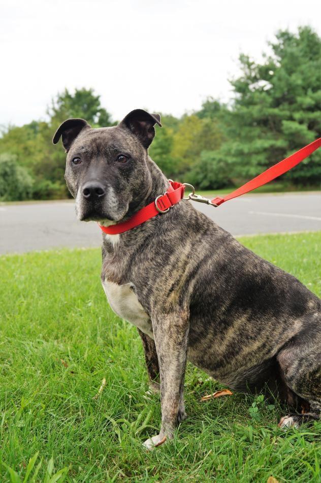 Adopt Brooklyn On Petfinder Dog Adoption Dog Pounds Animal Shelter