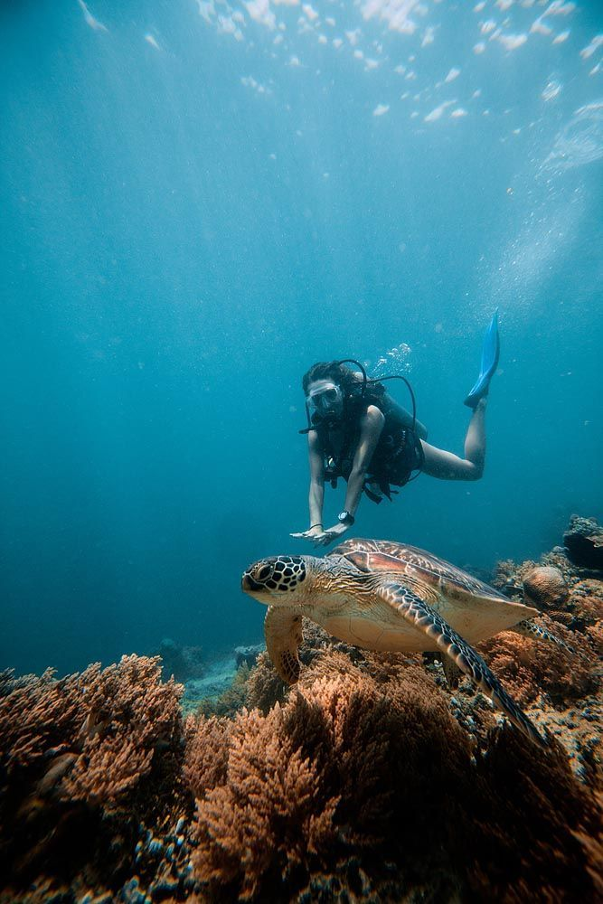 Snorkeling with Sea Turtles on Gili Trawangan - Underwater ...