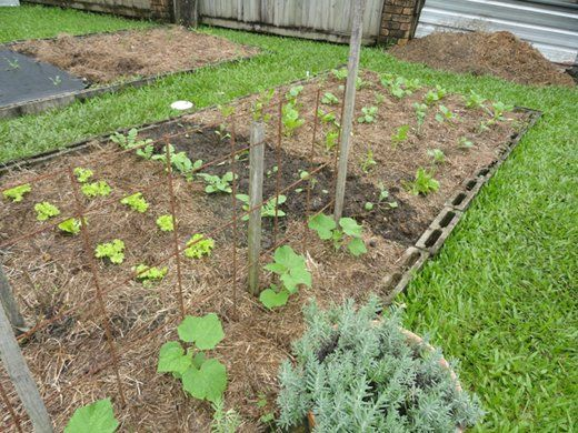 Make your own liquid fertilizers down to earth blog for Vegetable garden fertilizer