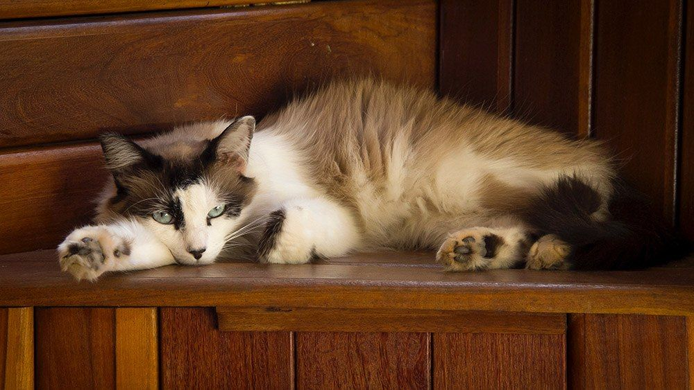Best Cat Foods For Older Cats With Sensitive Stomachs Best Cat Food Cool Cats Cats