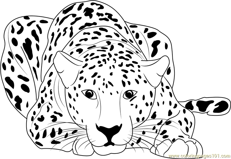 Cheetah Sitting Coloring Page Free Printable Coloring Pages Cool Coloring Pages Cheetah Drawing Coloring Pages To Print