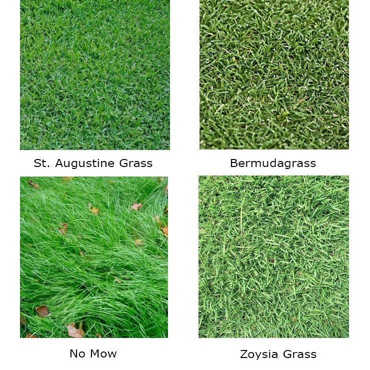 Drought Tolerant Lawn Conversion Backyard Landscape