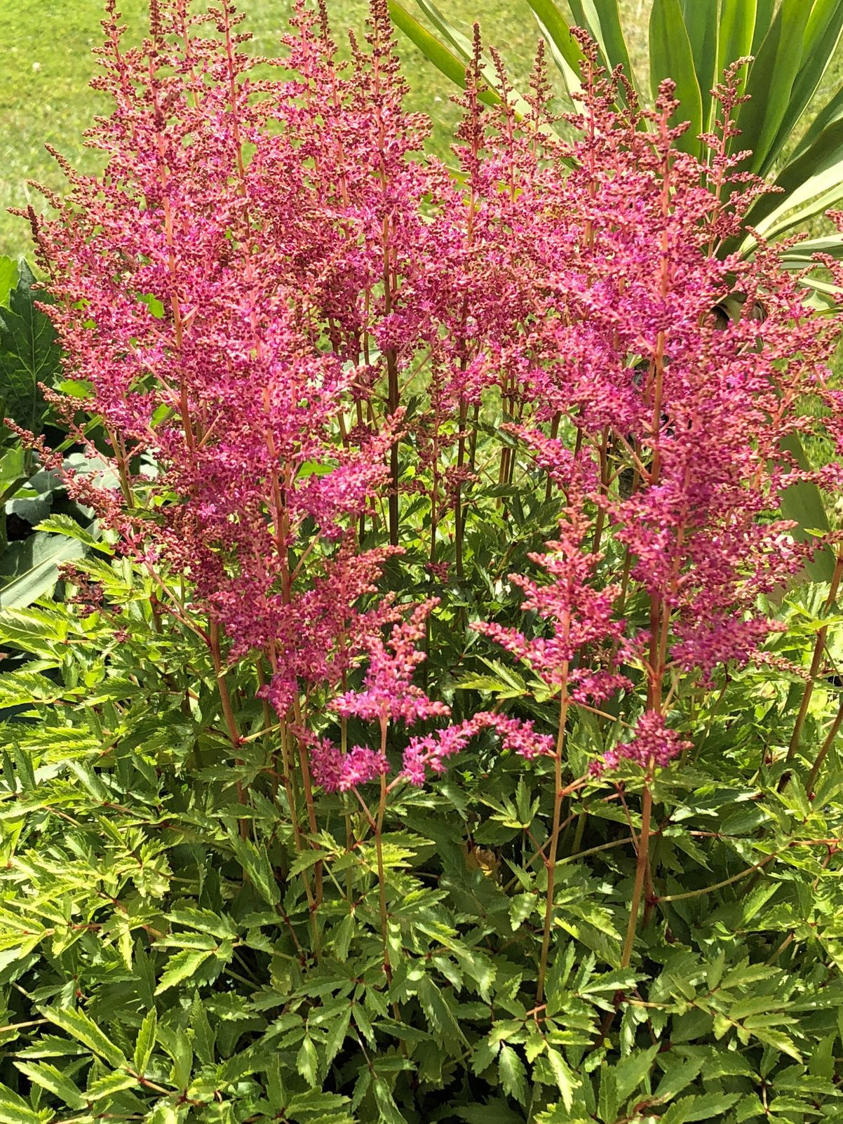 20 Perennials That Will Actually Thrive in Shade #shadeplantsperennial