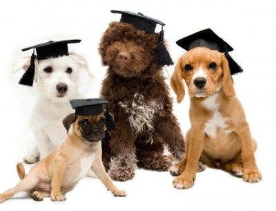 Dog Training Burlington Nc Bit Ly 1oimfgy