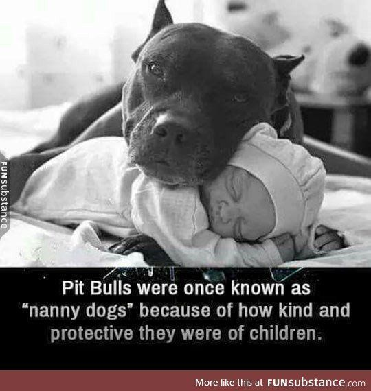 Nanny dogs #PitBullQuotes #PitBullMemes | Pit Bulls are awesome