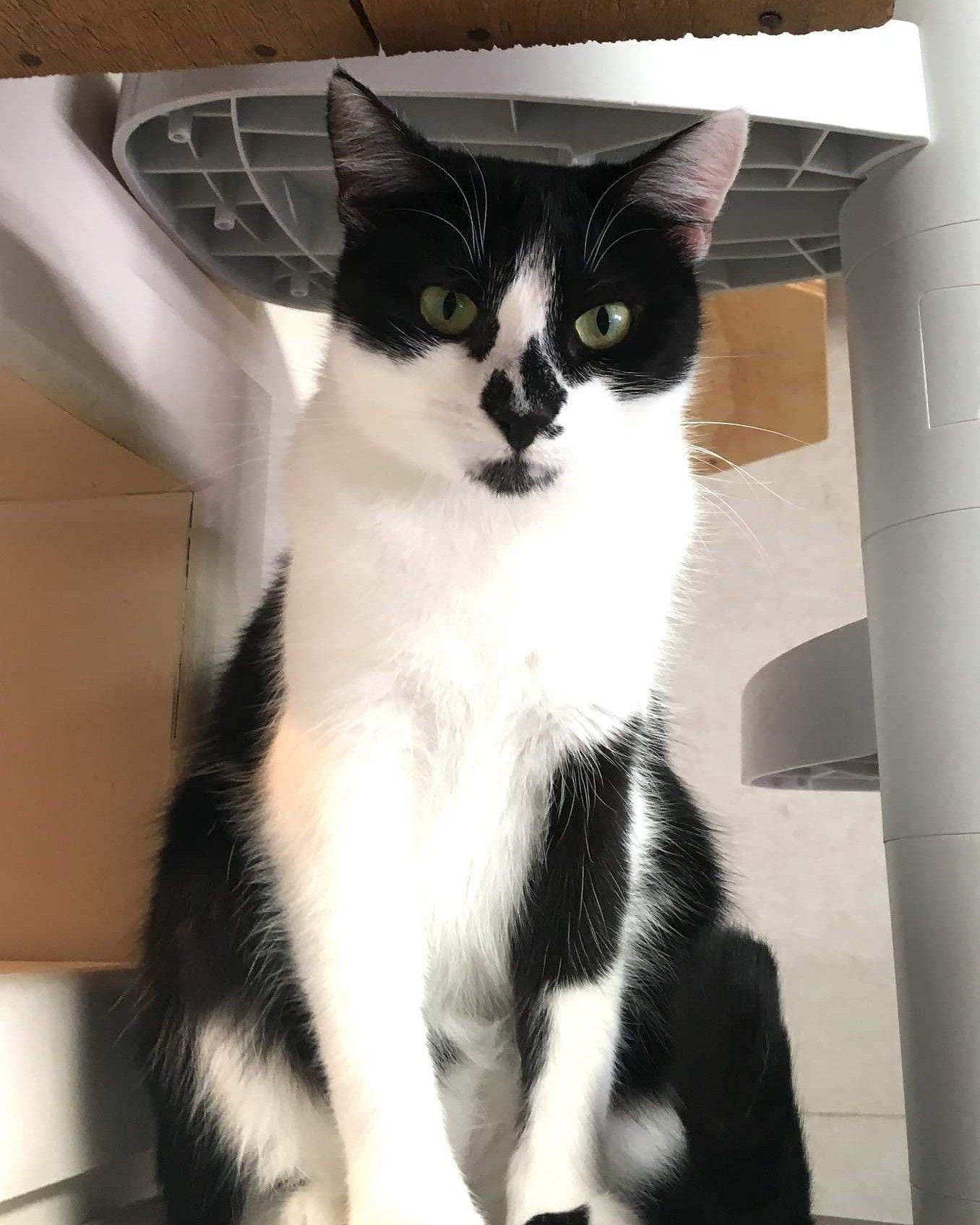 Neko Ngeru Cat Adoption Cafe Cat Adoption Cat Ladder Cats