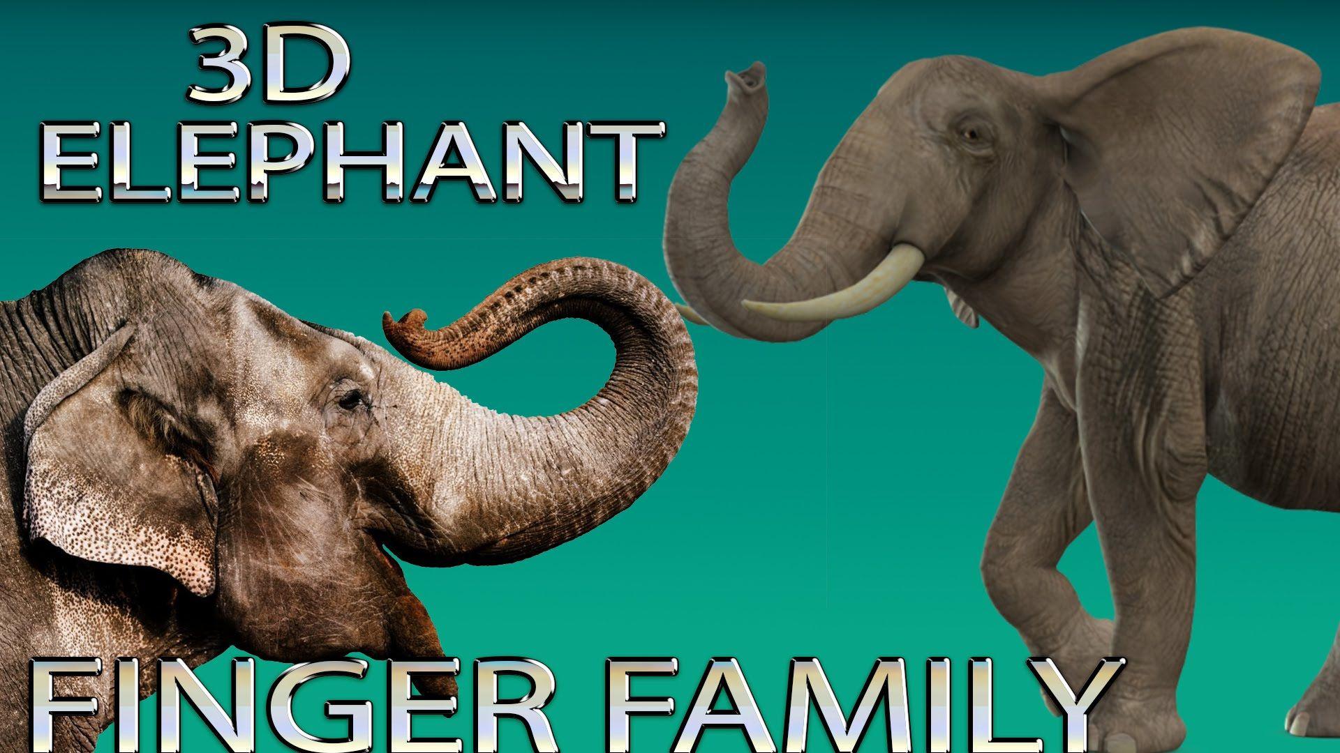 Elephant Finger Family 3d Rhymes Animals finger Family