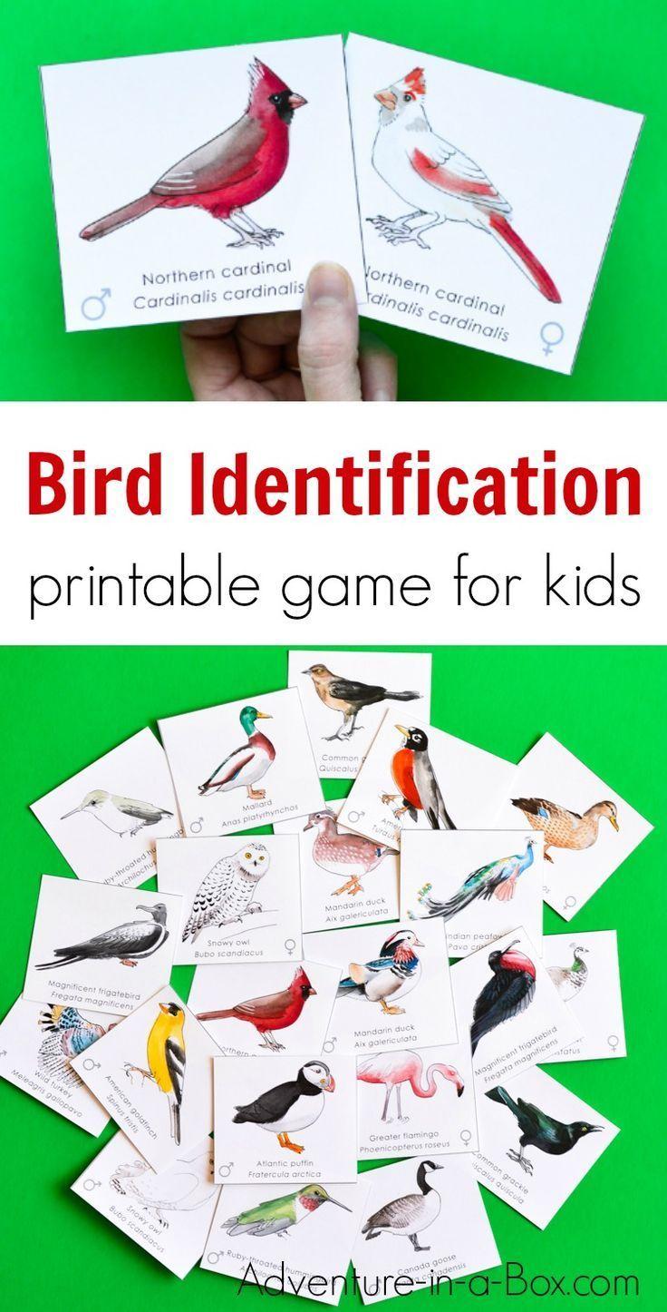 Match Male & Female Bird Pairs Printable Memory Game