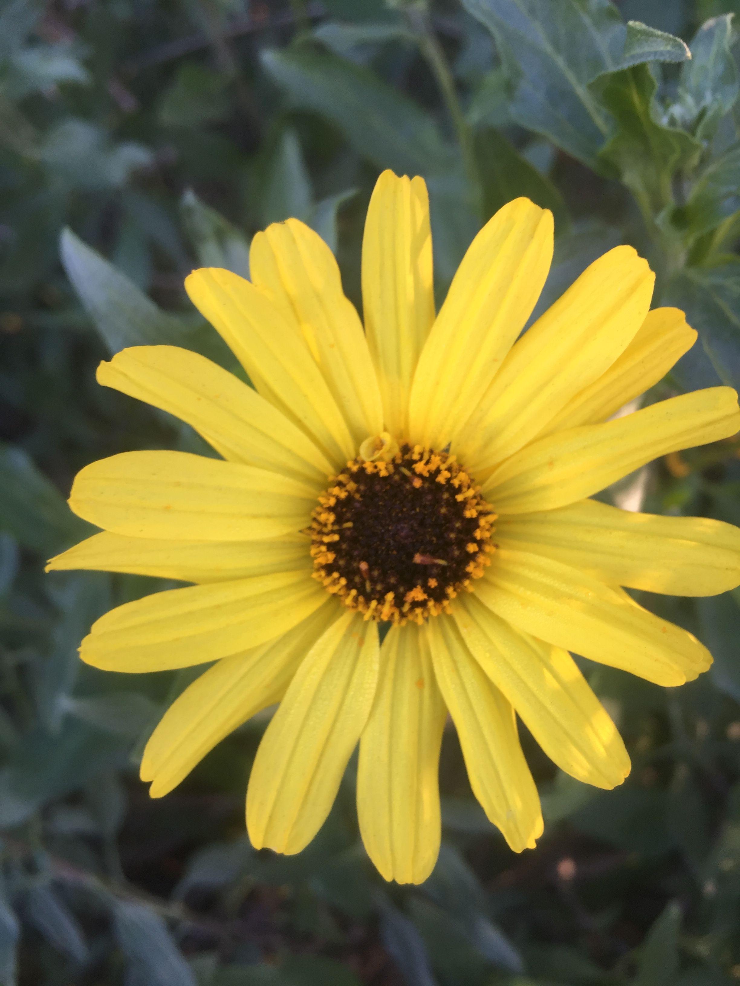irvineoutdoors flower yellowflower Found a