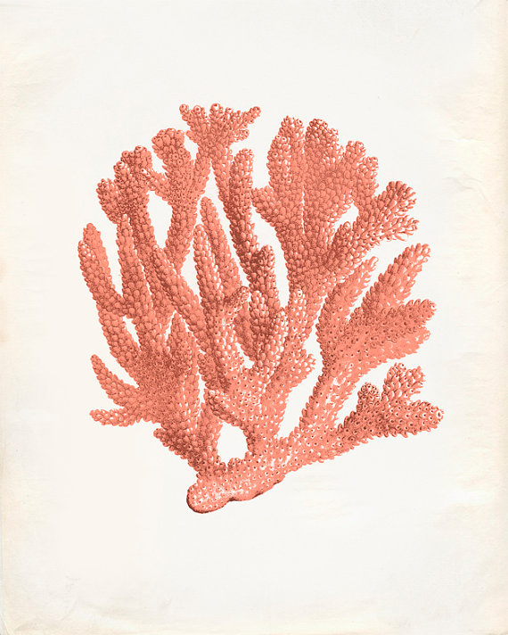 Coral passion 8x10
