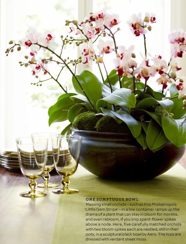 Orchids Arrajos De Flores Aranjos De Flores E Arranjos De