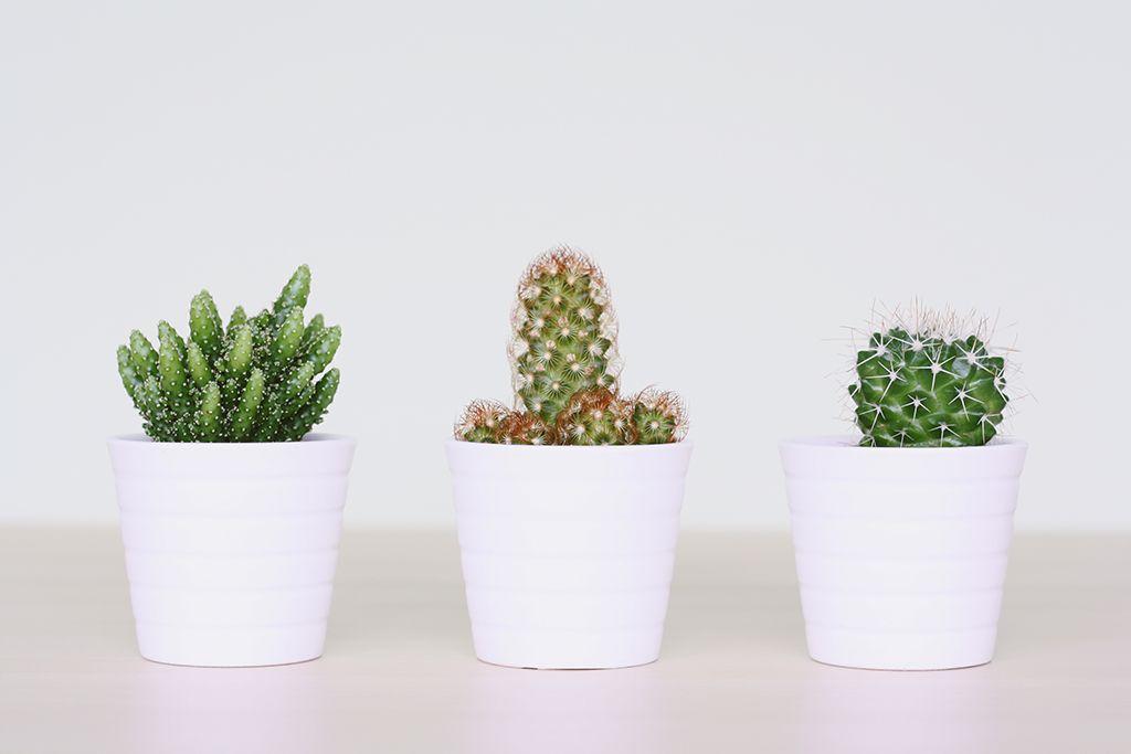 cactus love eunoia studio blog peek inside my blog pinterest cactus plants and mini. Black Bedroom Furniture Sets. Home Design Ideas