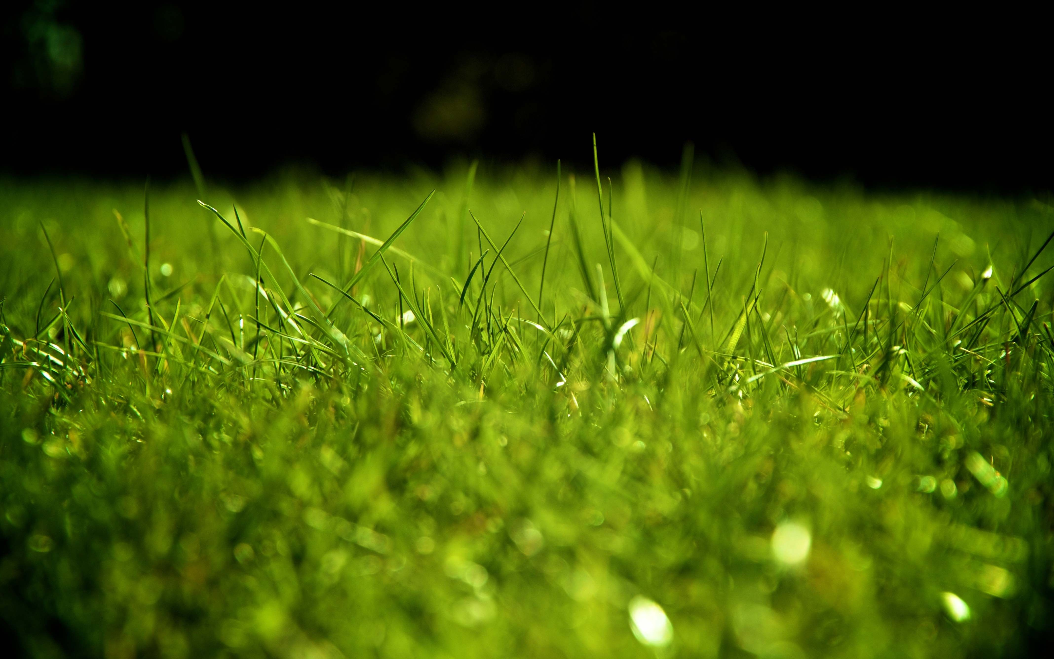 Hd Wallpaper Grass Backgrounds