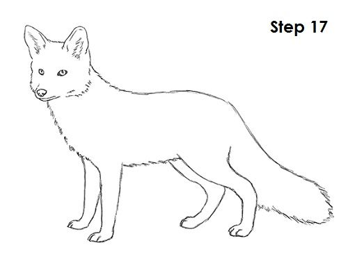Red Fox Drawing 17 Crafts In 2019 Fox Drawing Drawings Animal