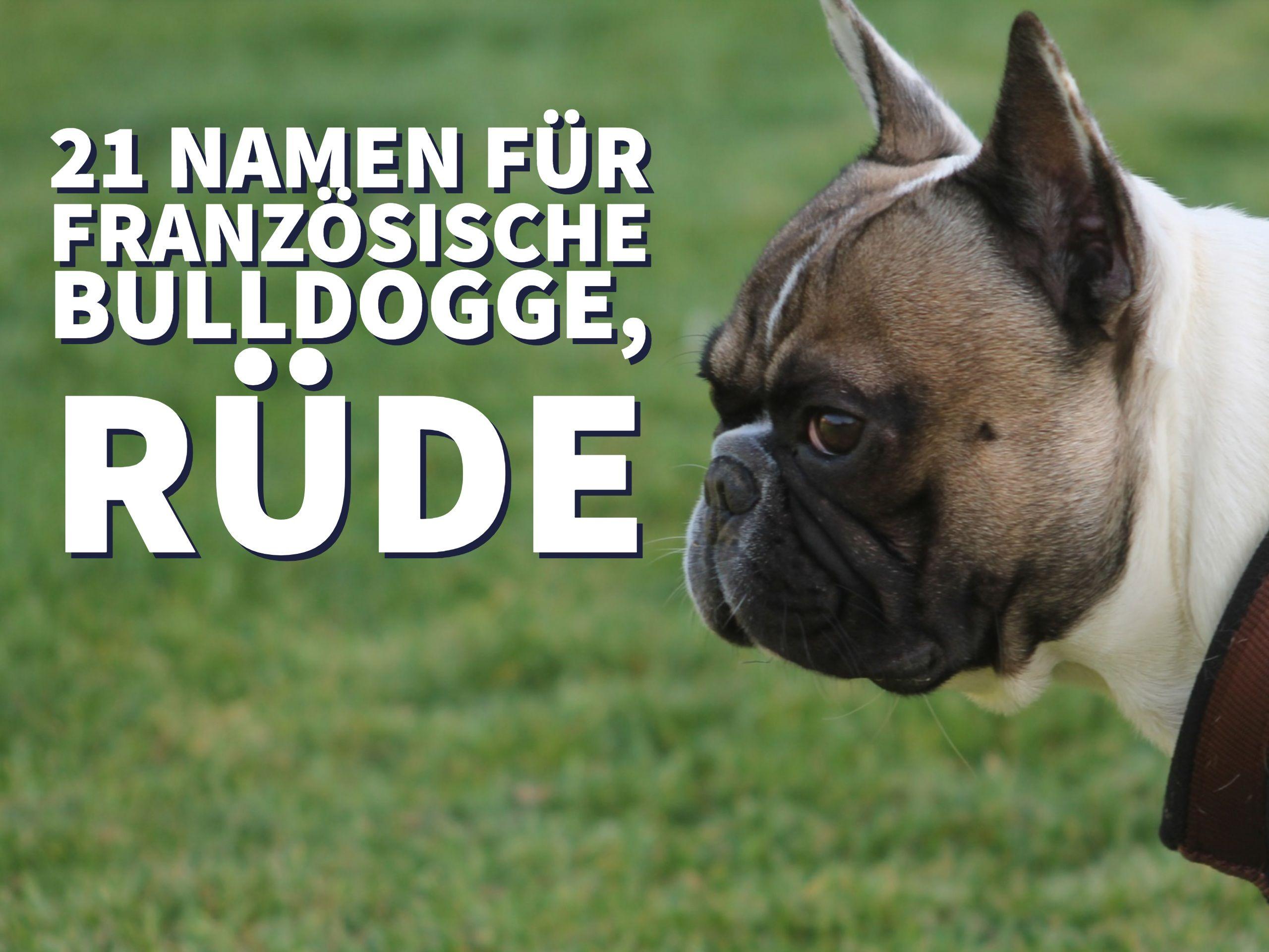 französische bulldogge erziehung