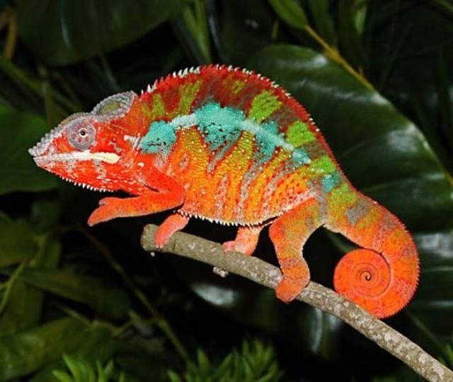 Madagascar, la isla roja de África, es perfecta para un viaje de novios amantes de la naturaleza, ya que tiene una gran variedad de animales y plantas exóticas, así como gran cantidad de parajes naturales únicos y espectaculares.