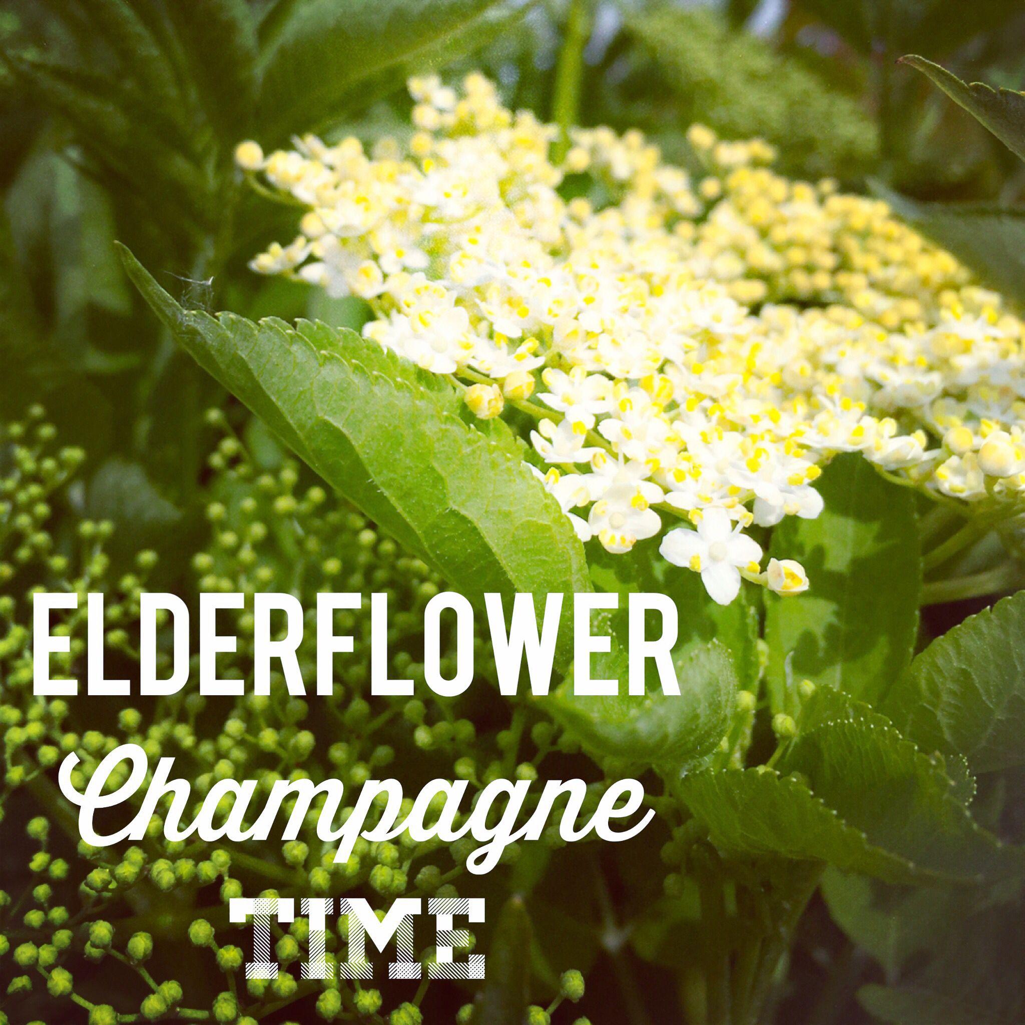 Pest Control Bristol Bristol, Elderflower champagne