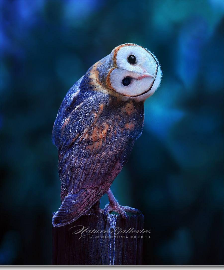 Photographer captures stunning photos of owls like you've ...