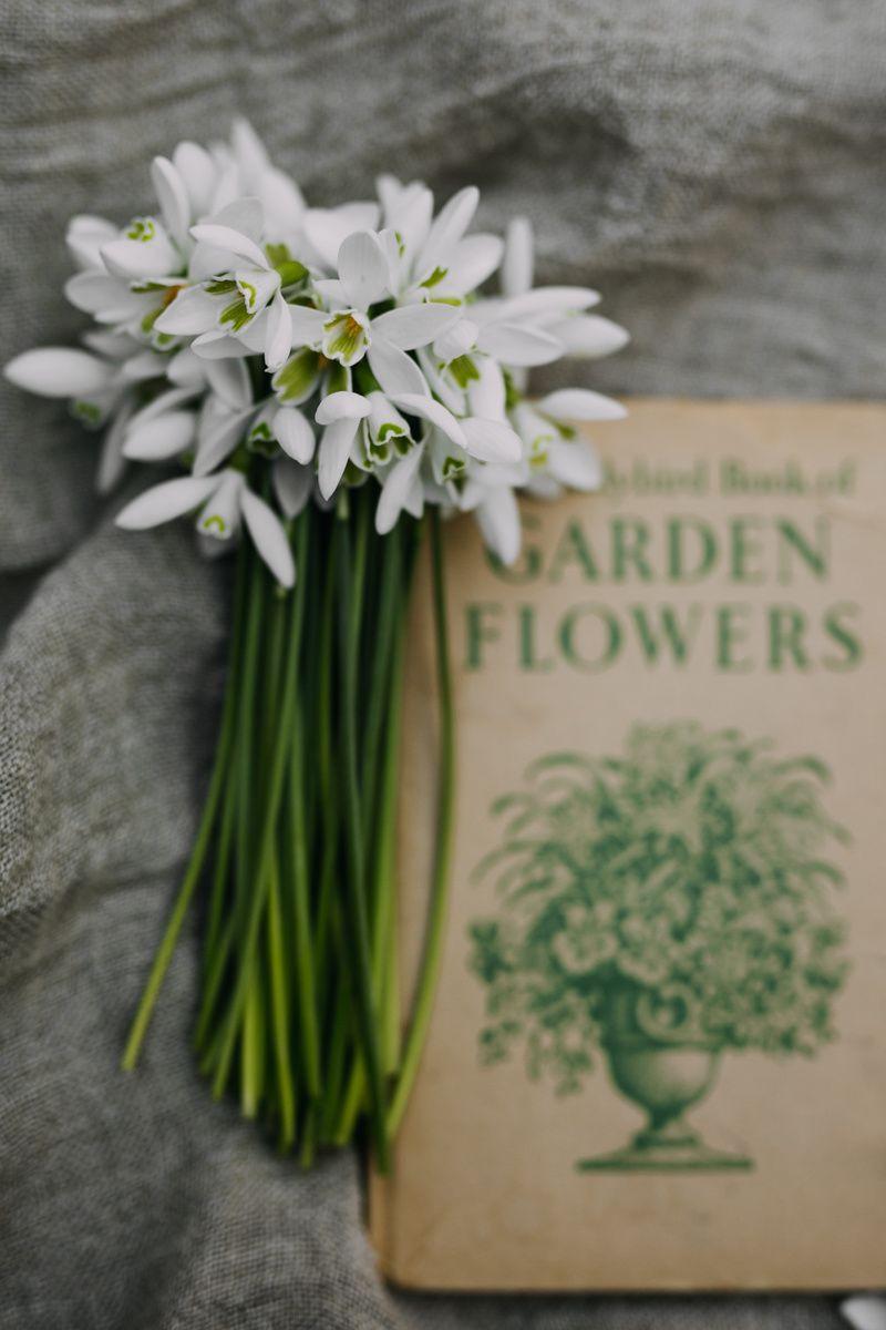 Snowdrops Spring Bulbs White Flowers Pinterest Spring