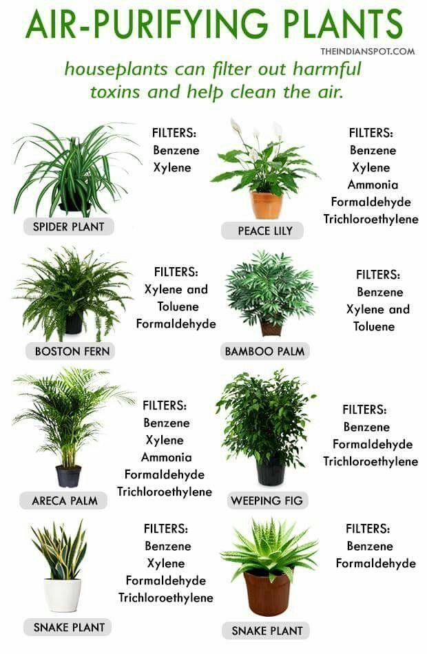 Air Purifying Plants For The Home Pinterest Indoor And Garden
