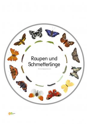 Legekreis Schmetterlinge Kigaportal Kindergarten 01 Schmetterling Naturkindergarten Raupe Schmetterling