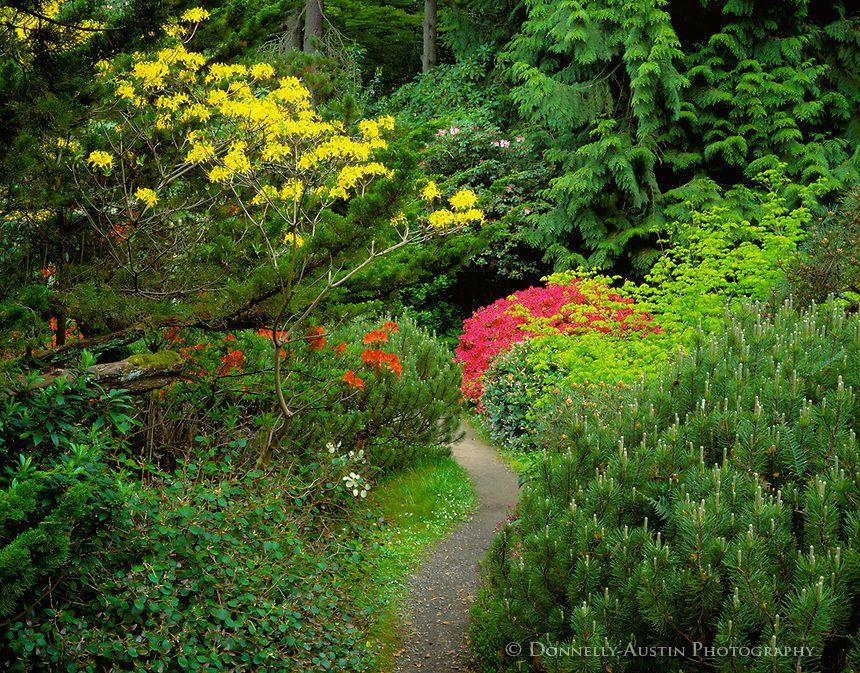 Seattle, WA Kubota Garden city park, with path thru forest