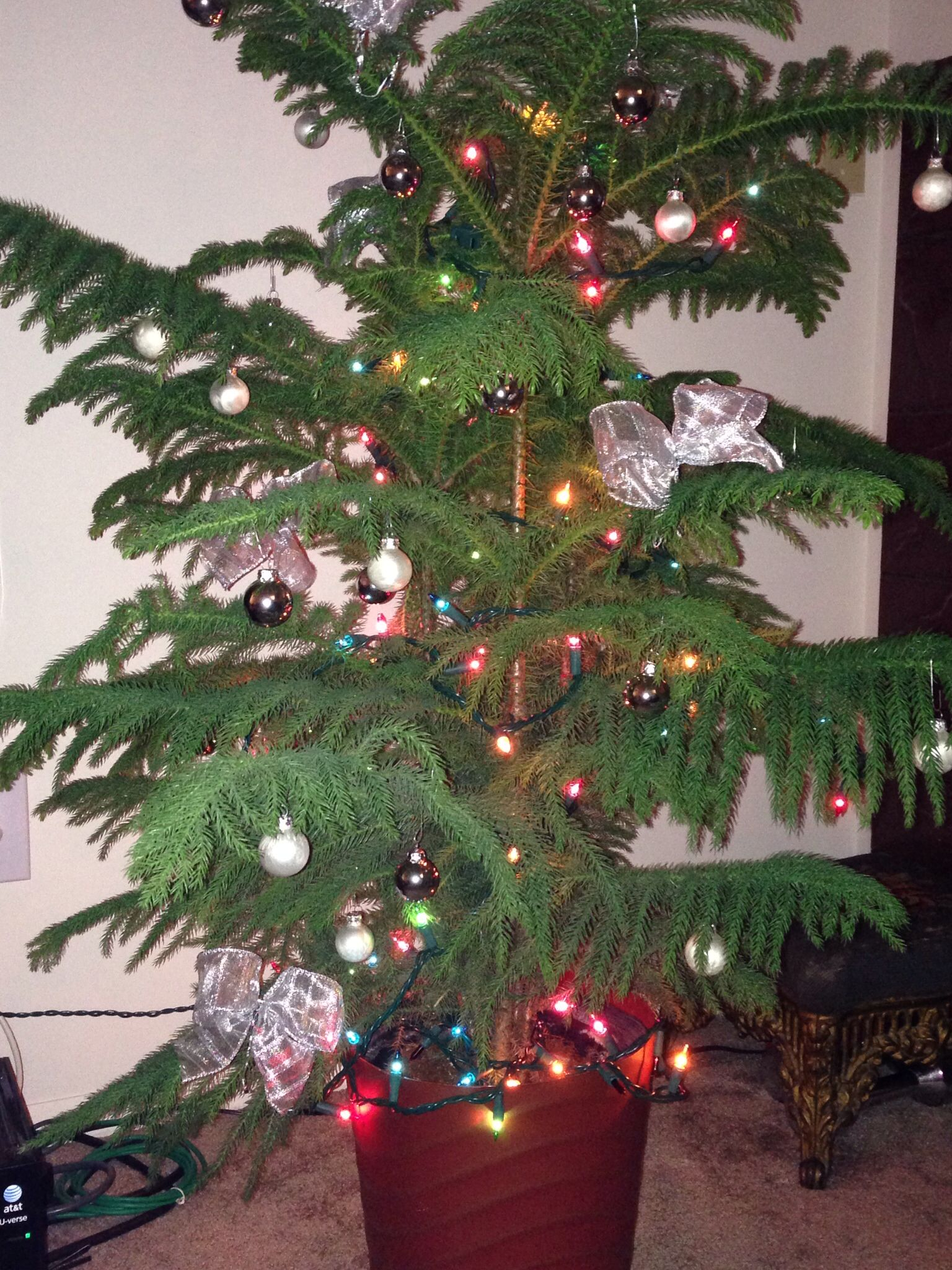 This year we decided to go green and decorate a Norfolk Pine! Love ...