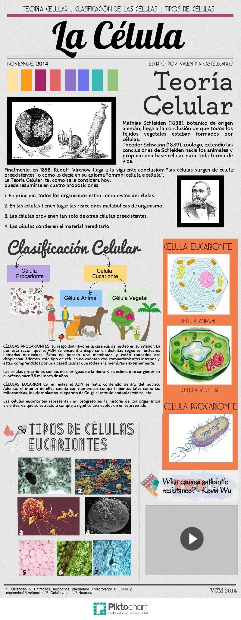 La Célula   @Piktochart Infographic Valentina Castelblanco   hojas ...