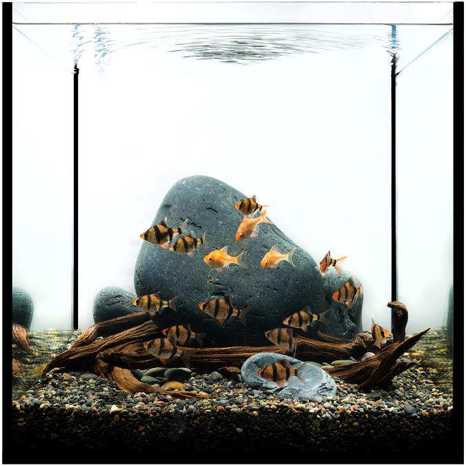 Aquascape Ideas Aquascape Without Plants