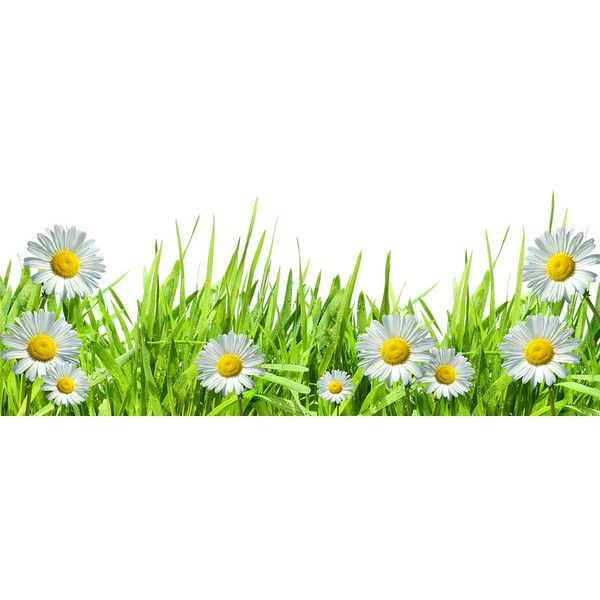 Grass with white daisies against a white ❤ liked on Polyvore