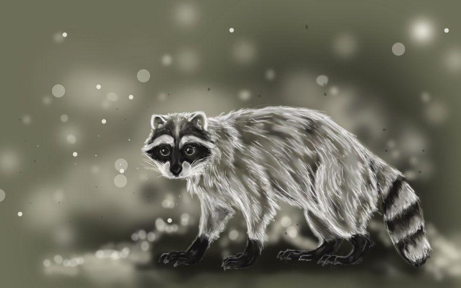 raccoon_wallpaper__repost_by_puppy_chow.jpg (900×563)