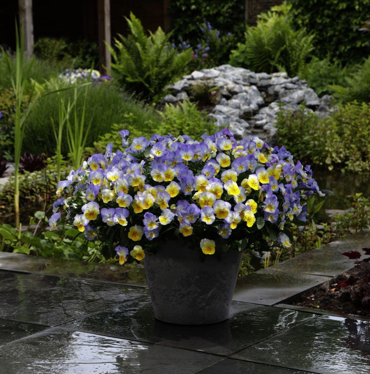 Gardening For Beginners In Spring Regarding Gardening Zones