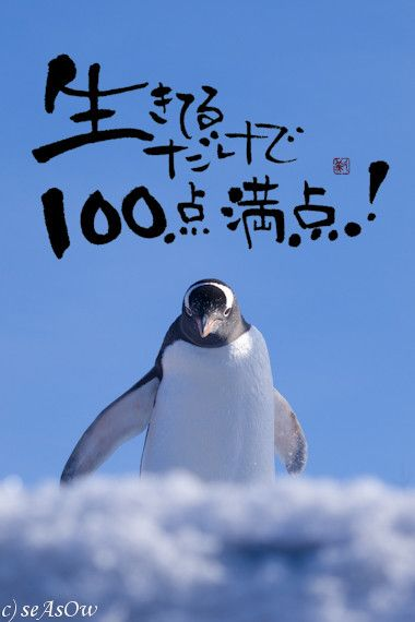 100点満点 ペンギン 面白い言葉 癒しの名言 幸せ 名言