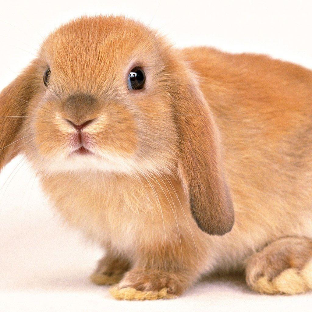 fluffy baby bunny - photo #5