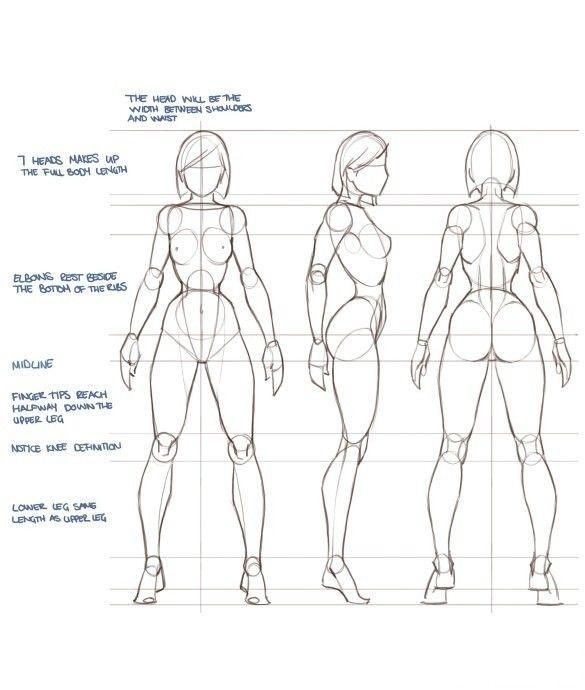 Pin By Doran Hsu On Pinterest Anatomy Drawing Drawings