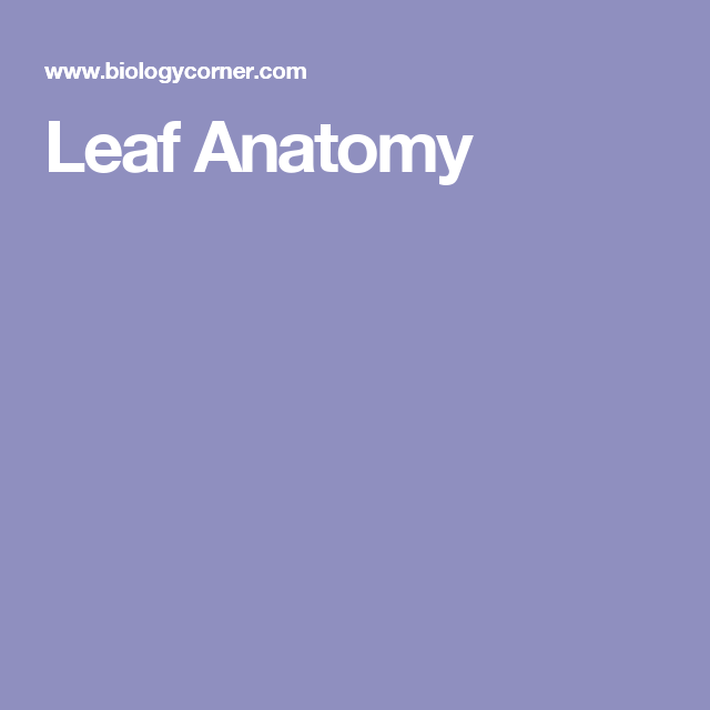 Leaf Anatomy Coloring | Anatomy, Leaves, Botany