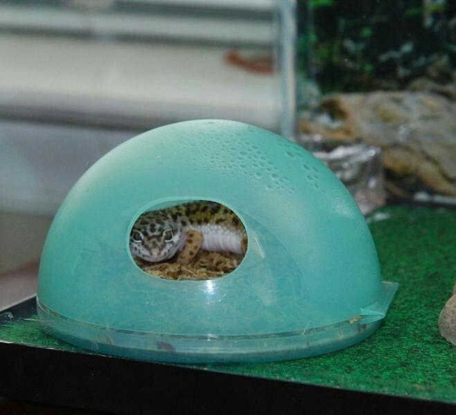 Leopard Babies image by Christin Calvert | Lepord gecko ...Leopard Gecko Hatchling Tank Setup